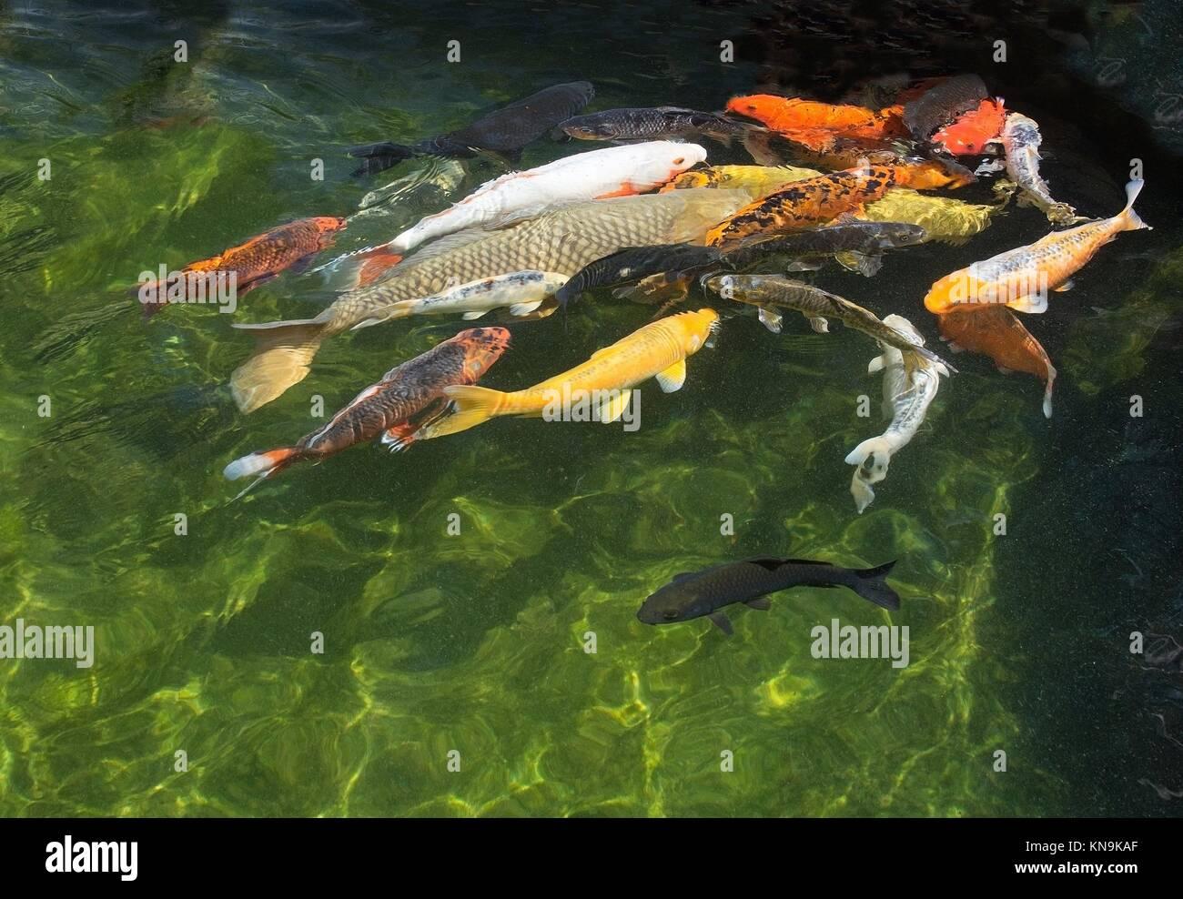 Palma aquarium and mallorca stockfotos palma aquarium for Aquarium fische im teich