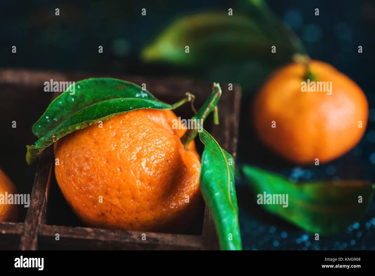 Nahaufnahme der Mandarinen in einer Holzkiste auf einem dunklen Hintergrund. Wassertropfen auf einer Fläche. Stockbild