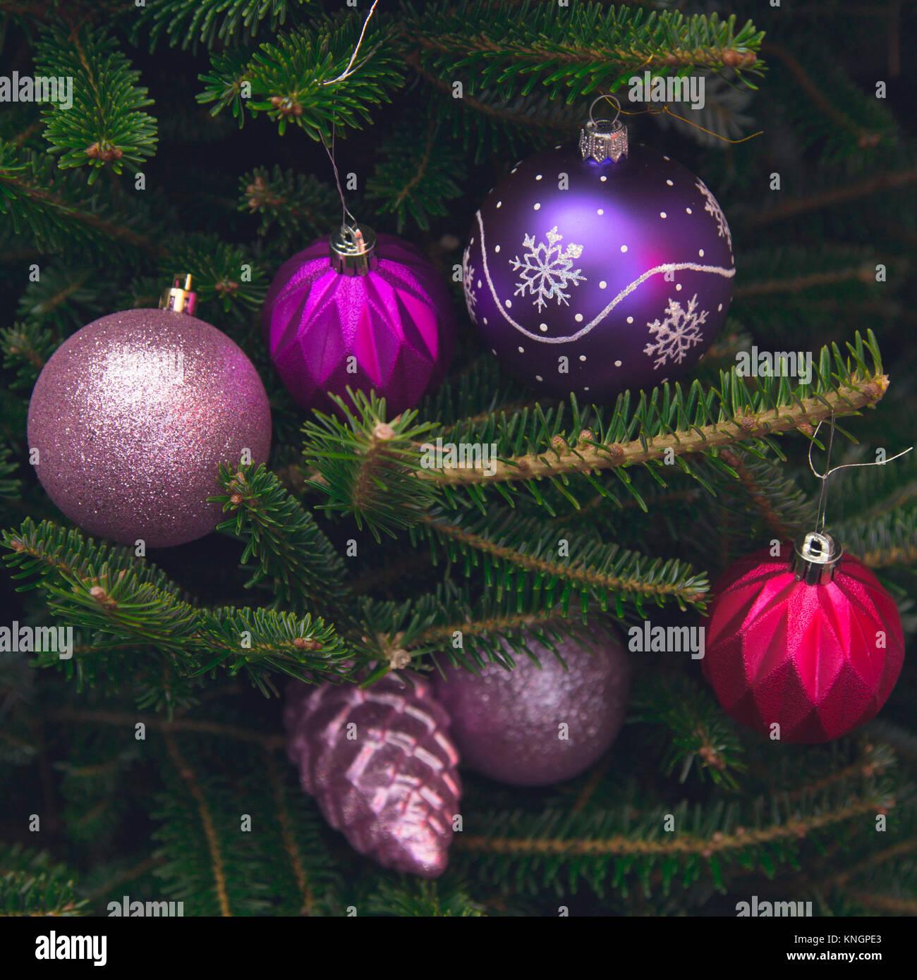Christbaumkugeln Violett.Glanzend Pink Und Lila Christbaumkugeln Aus Glas Hangen An