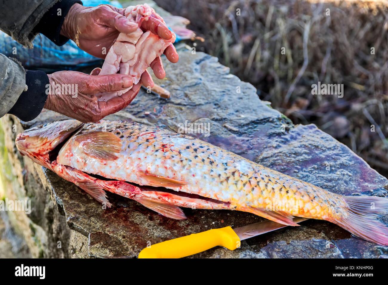 Fisch Eier Kaviar