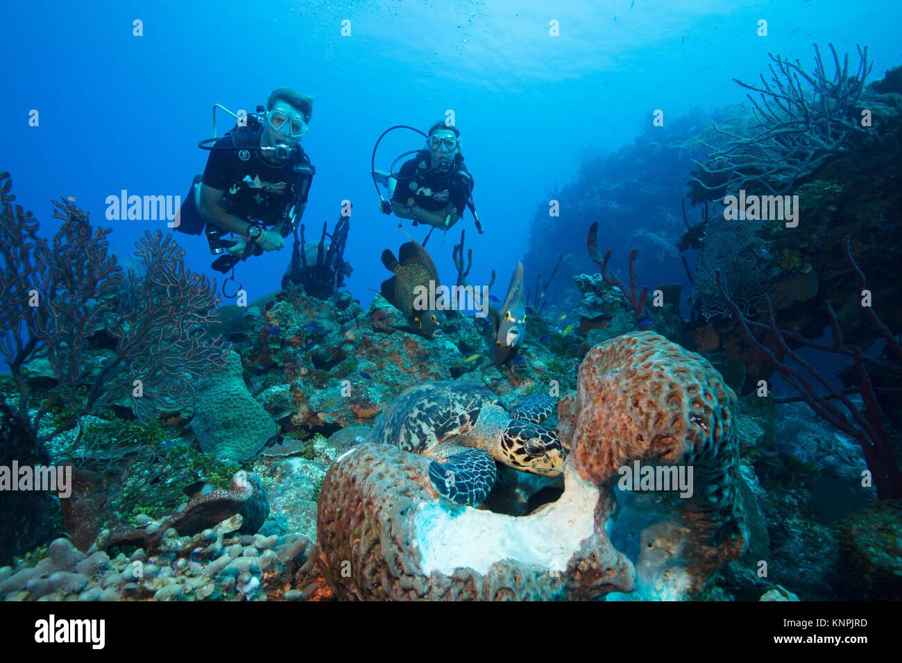 Taucher beobachten die Interaktion der verschiedenen Arten von Meerestieren, wie sie das Gleiche essen Quelle zuzugreifen. Stockfoto