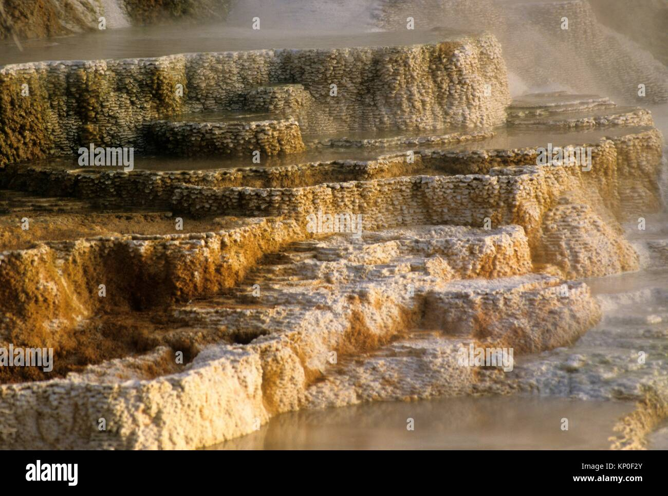 Kanarischen Frühling bei Mammoth Hot Springs, Yellowstone National Park, Wyoming. Stockbild