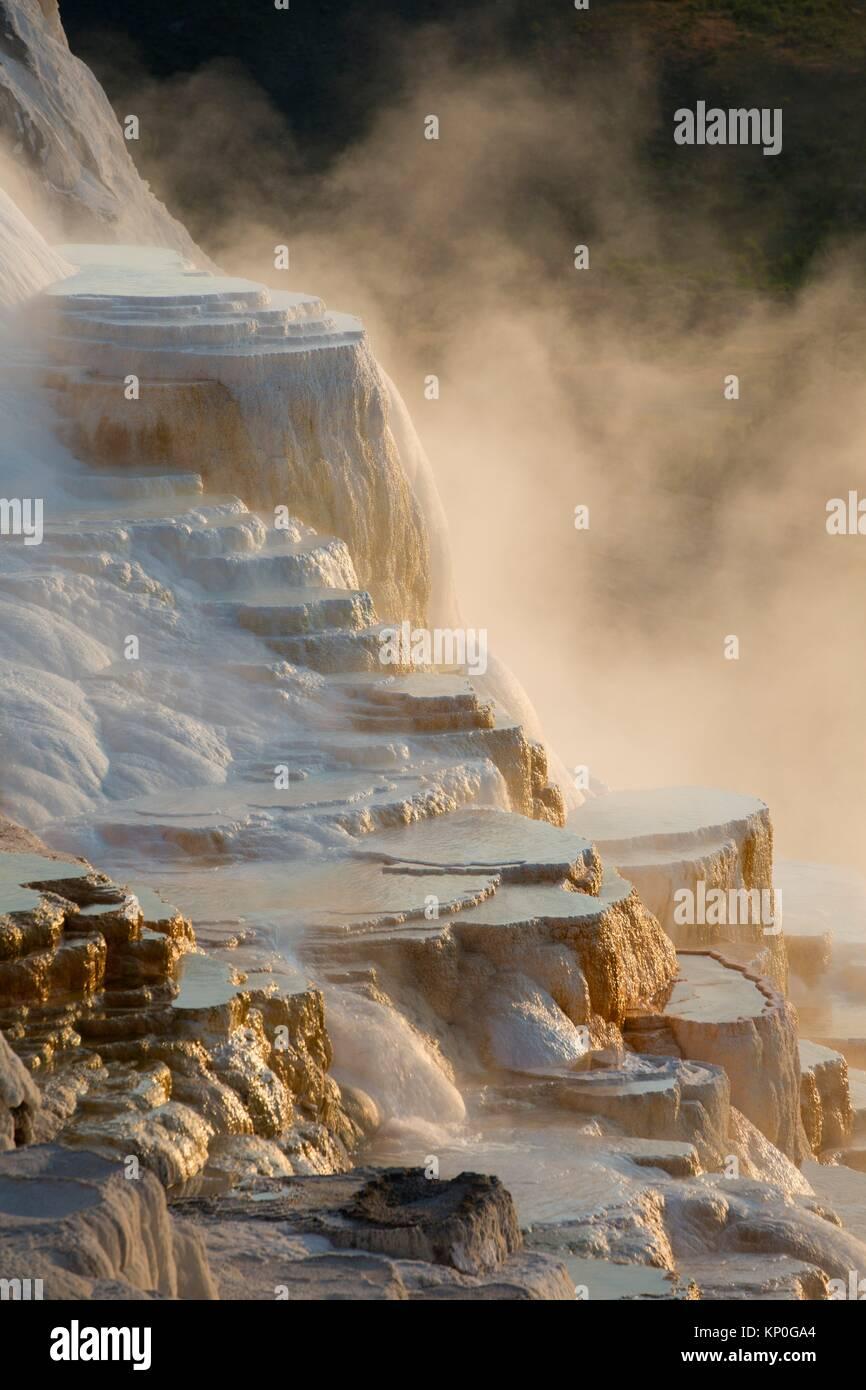 Kanarischen Frühling bei Mammoth Hot Springs, Yellowstone National Park, Wyoming. Stockbild