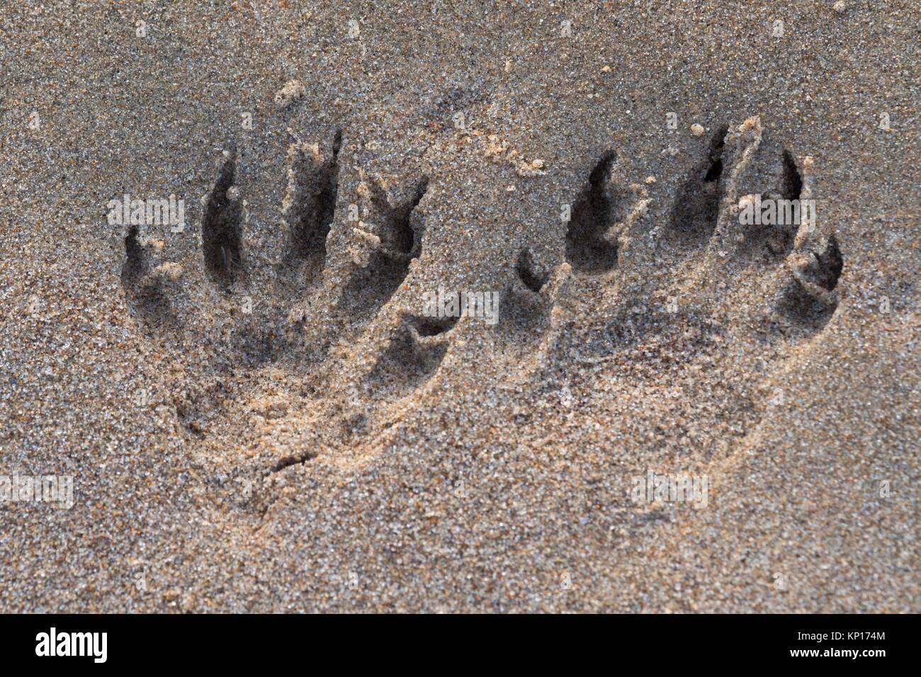 Animal Prints entlang Siuslaw Bay, Florence, Oregon. Stockbild