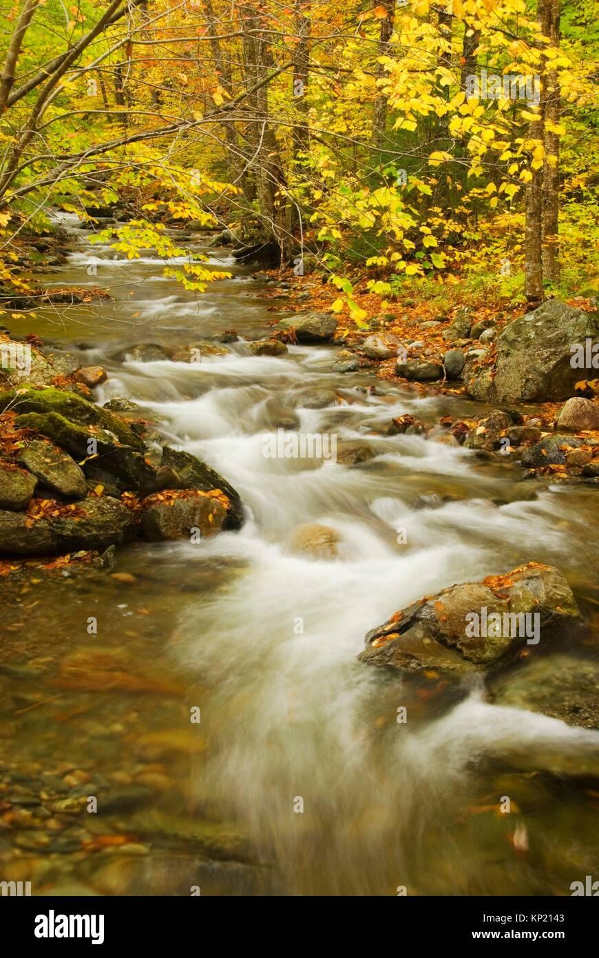Hancock Zweig des White River entlang Hancock Zweig Trail, Texas fällt Erholungsgebiet, Green Mountain National Stockbild