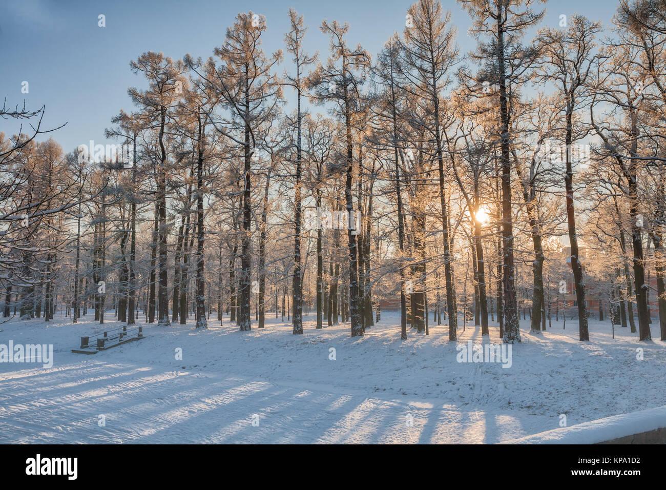 Niedrige Winter Sonne scheint durch das verschneite Bäume im Park, St. Petersburg, Russland Stockbild
