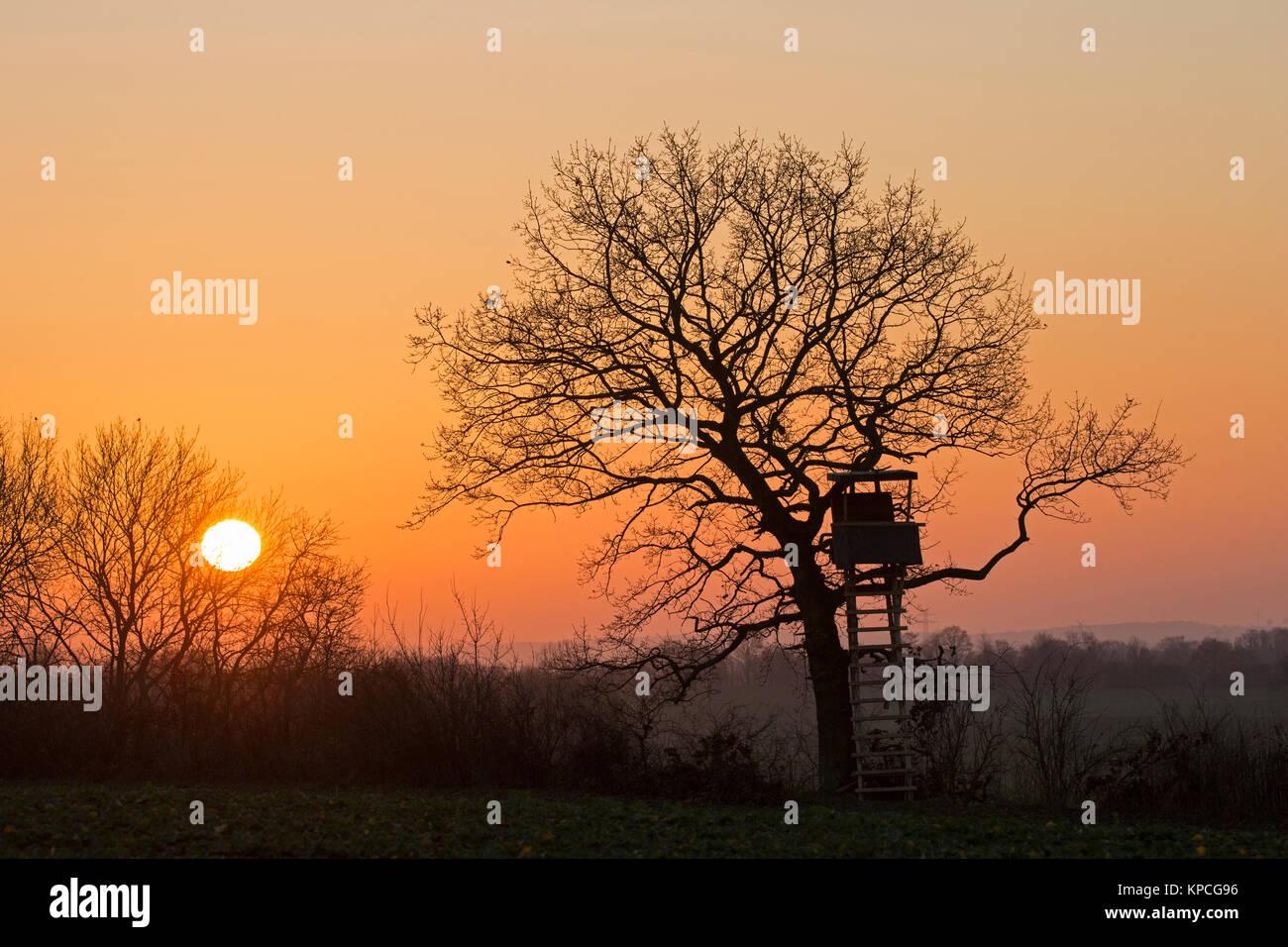 Aufgewachsen in Baum gegen Sonnenuntergang im Winter Silhouette verbergen Stockbild