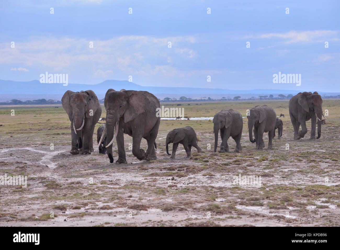 Kenia ist ein hervorragendes Reiseziel in Ostafrika. Berühmt für die freilebenden Tiere und wildwachsenden Pflanzen Stockfoto