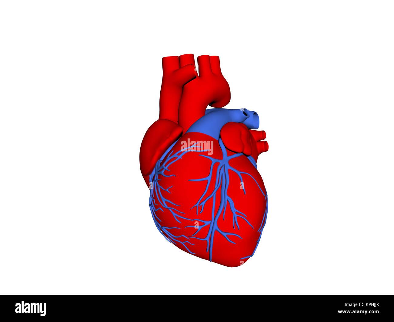 Ziemlich Bilder Menschliches Herz Zeitgenössisch - Menschliche ...
