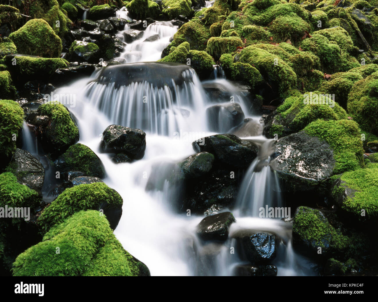 Usa washington state olympic national park creek in der for Wildparks in der nahe