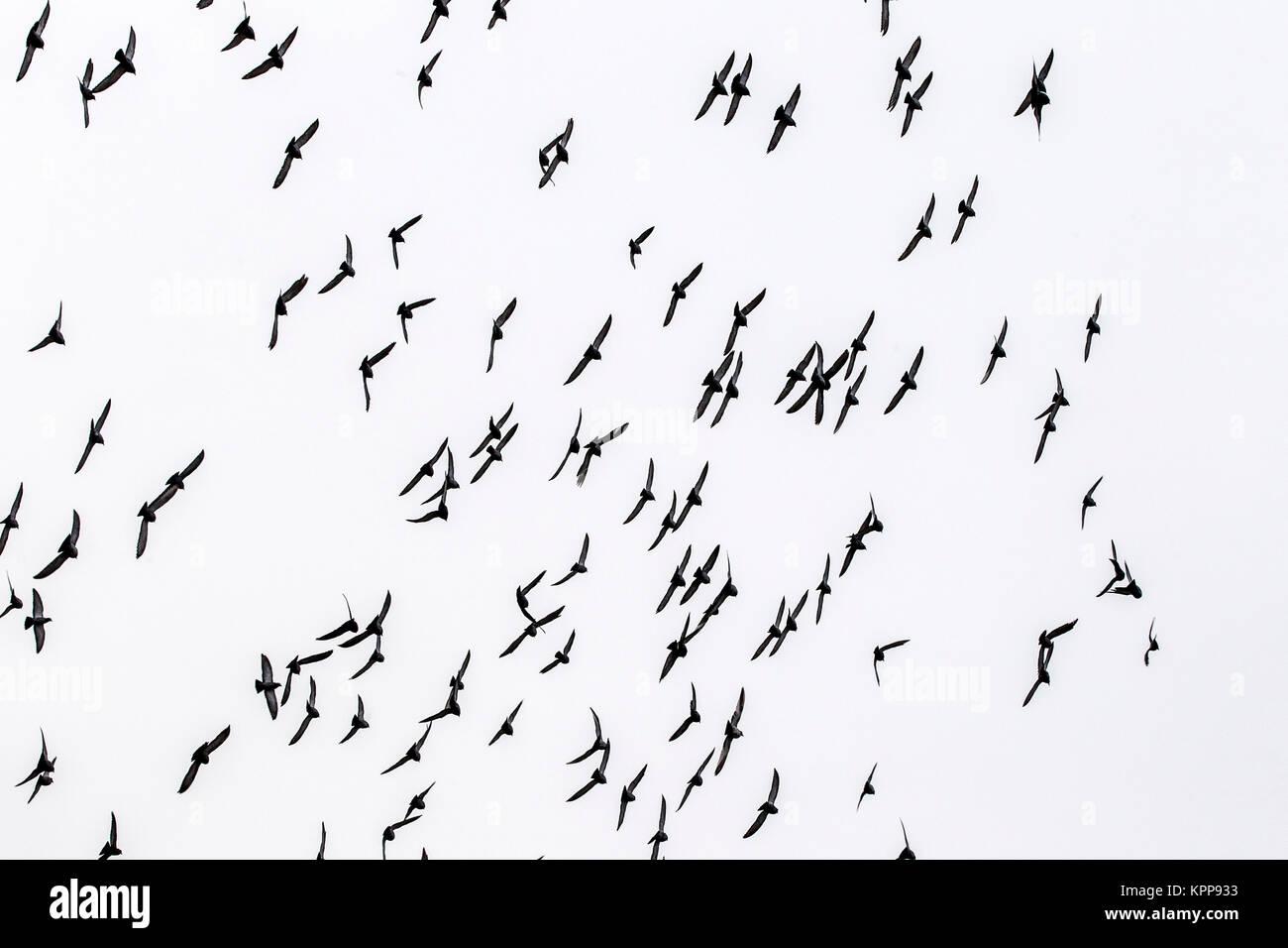Tauben Beflockung Und Fliegen Stockfoto Bild Alamy - Fliesen beflocken