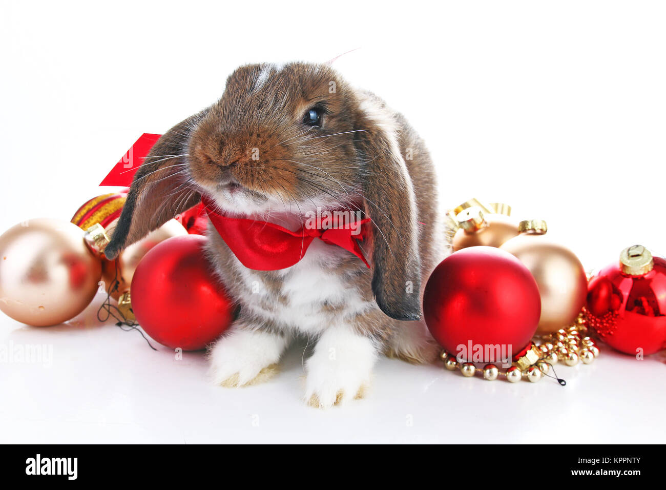 Weihnachten tiere s e weihnachten kaninchen kaninchen bunny lop feiern sie weihnachten mit - Weihnachtskugel englisch ...