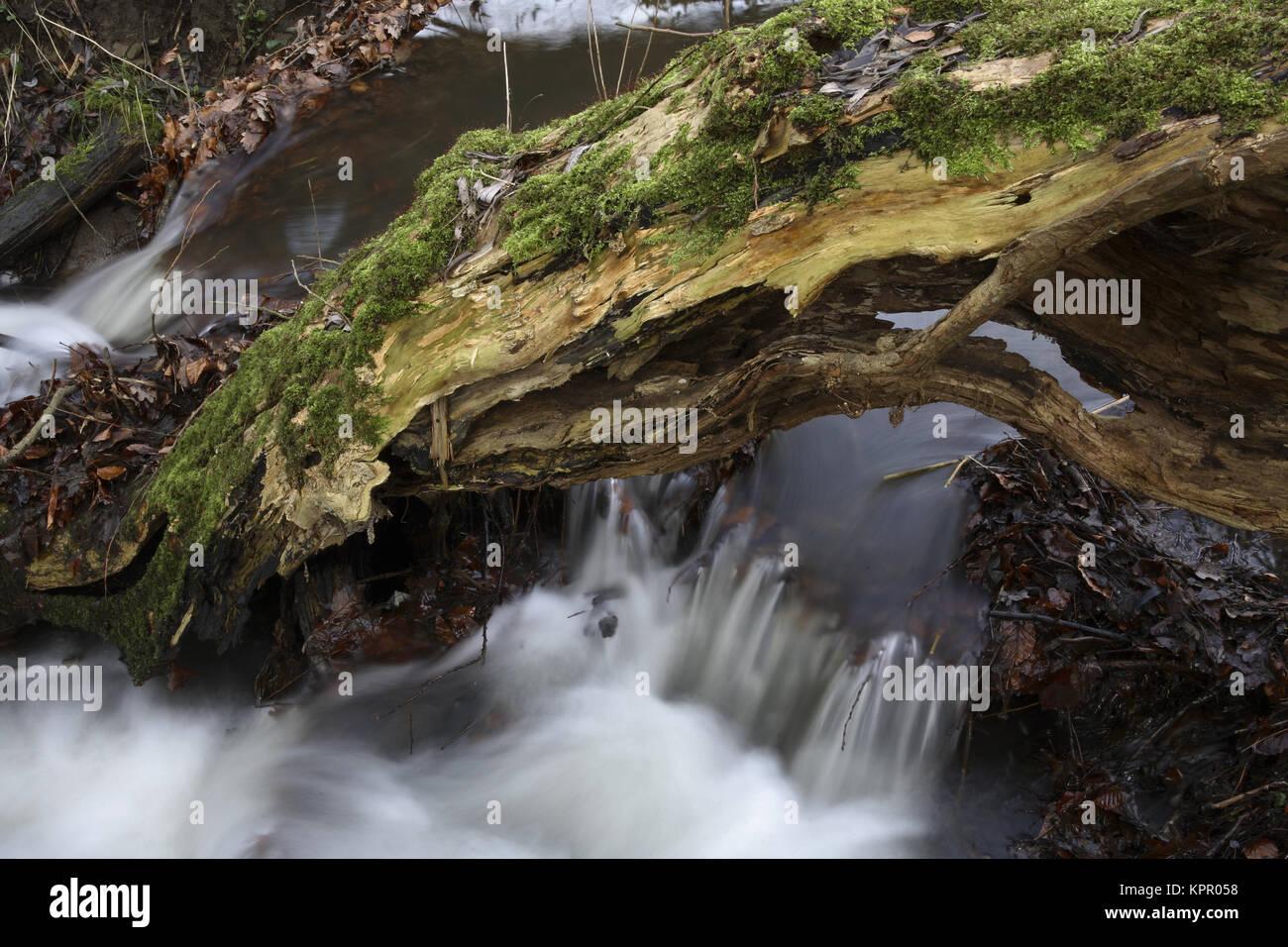 Deutschland, am Ardey Borbach Bach in den Bergen südlich von Witten. Deutschland, bin Borbach im Ardeygebirge Stockbild