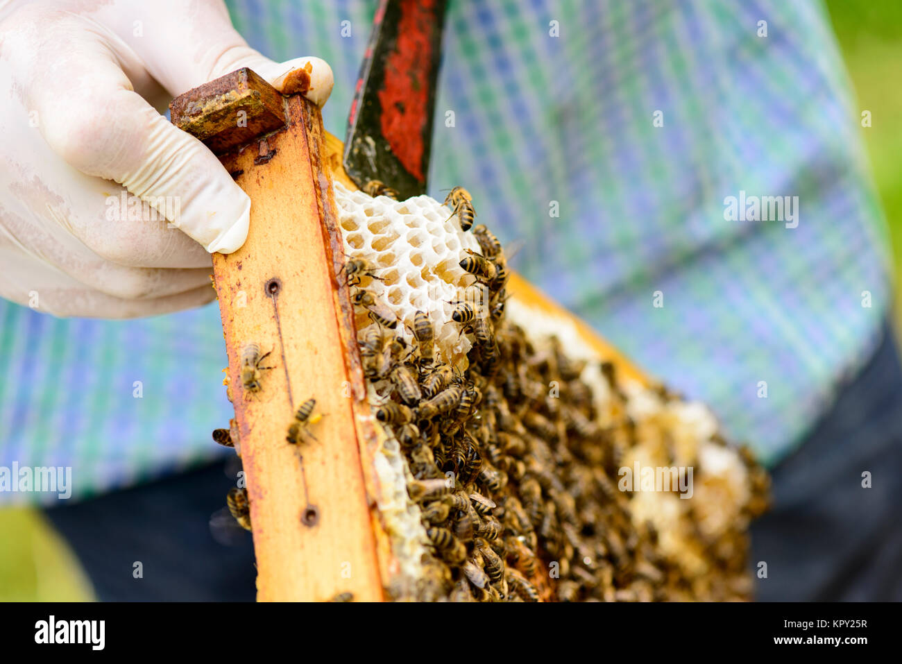 honigwaben waben bienenwachs wachs bienenstock stockfotos honigwaben waben bienenwachs wachs. Black Bedroom Furniture Sets. Home Design Ideas