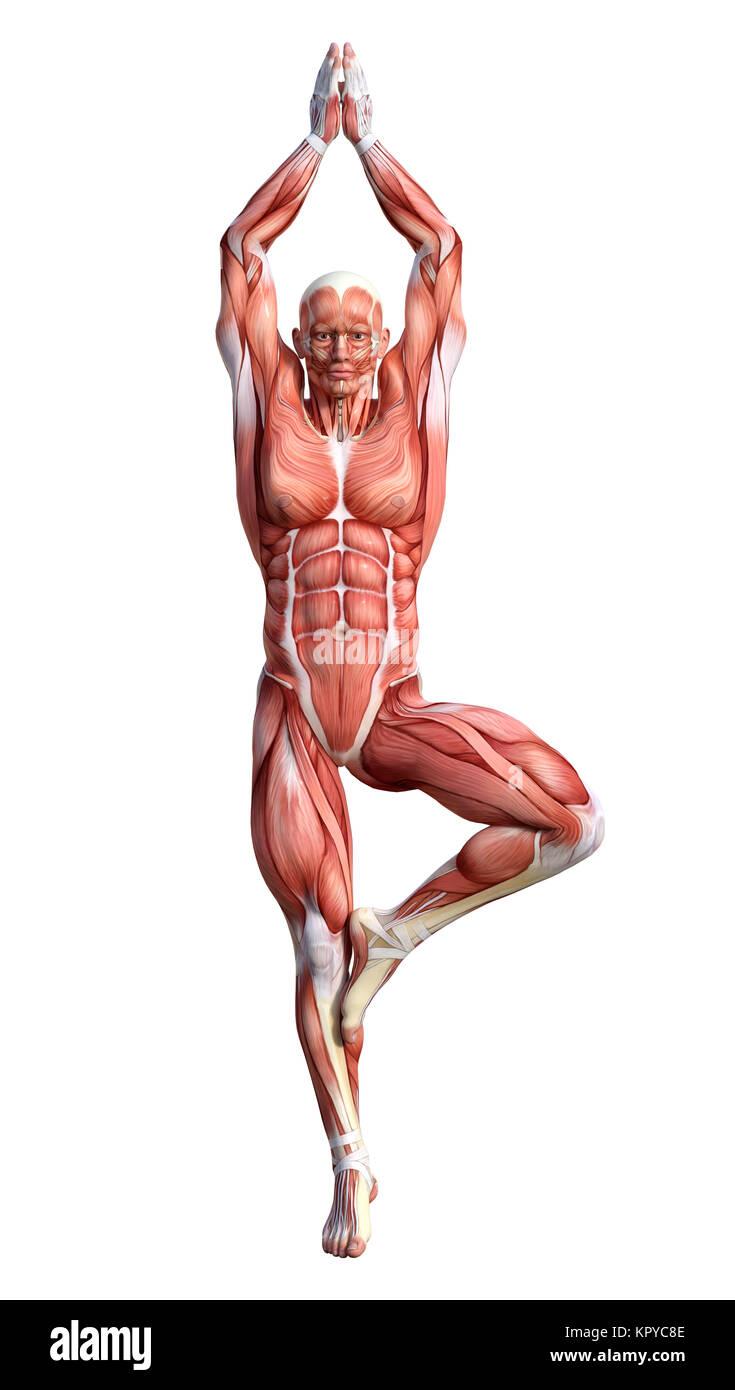 3D-Rendering für eine männliche Anatomie Figur mit Muskeln Karte ...