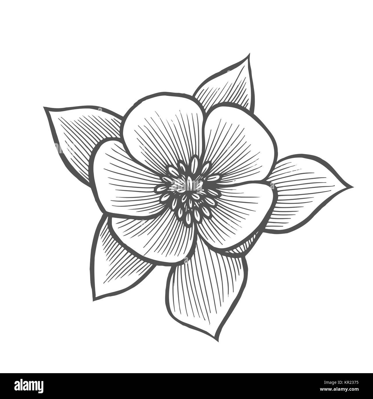 Sakura Blume Illustration Linienmuster. Vektorgrafiken. Malbuch ...