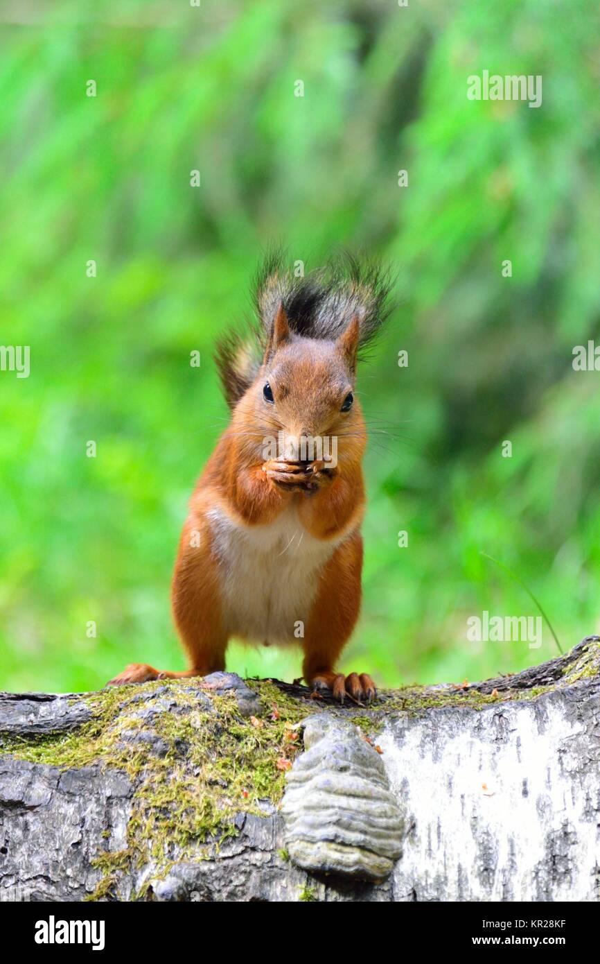 Was Essen Eichhörnchen Gerne