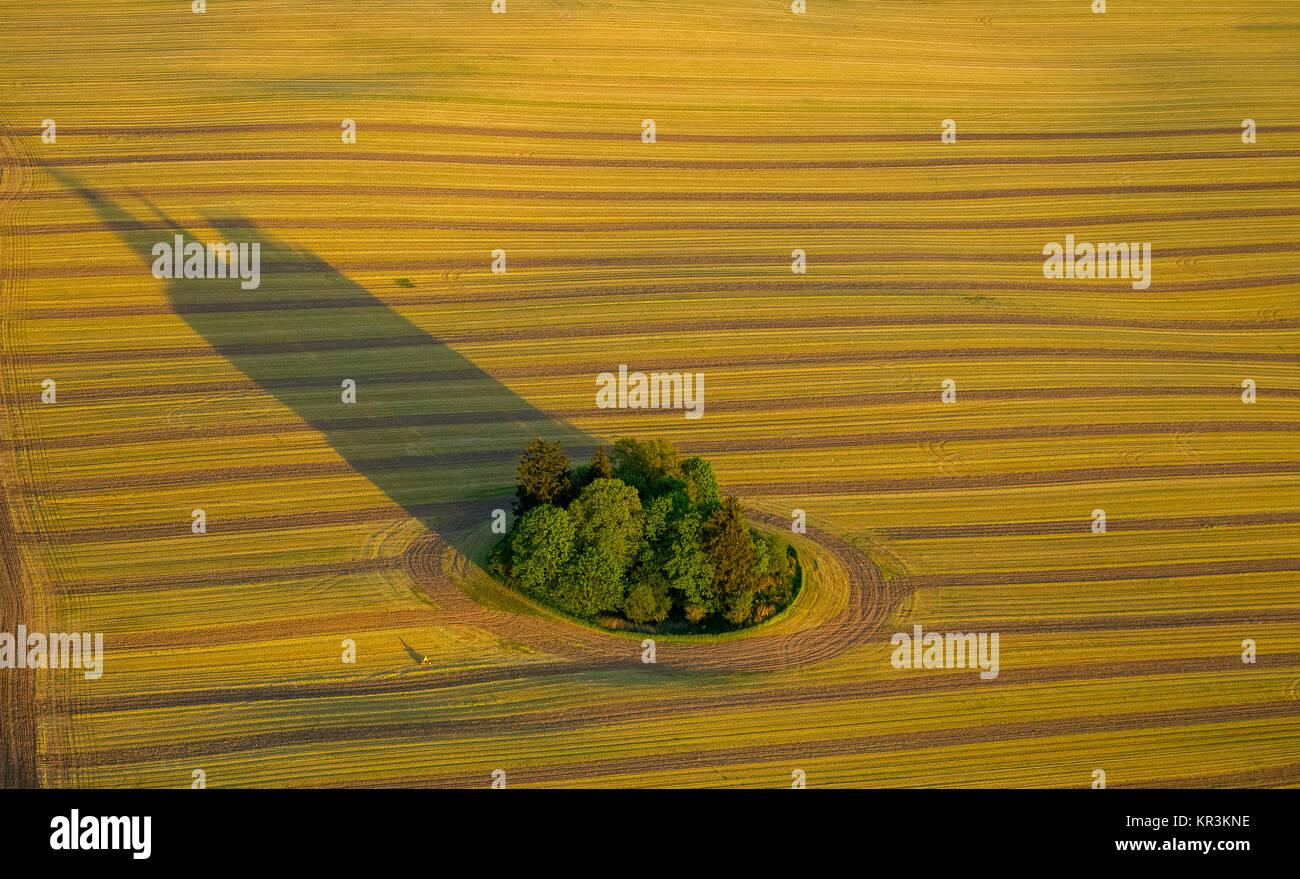 Geerntet floh mit Tree Island und langen Schatten Stuer, Mecklenburgische Seenplatte, Mecklenburger Seenplatte, Stockbild