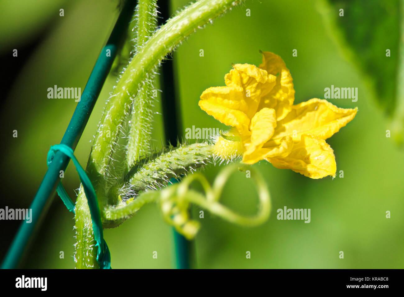 String Trellis Stockfotos & String Trellis Bilder - Alamy
