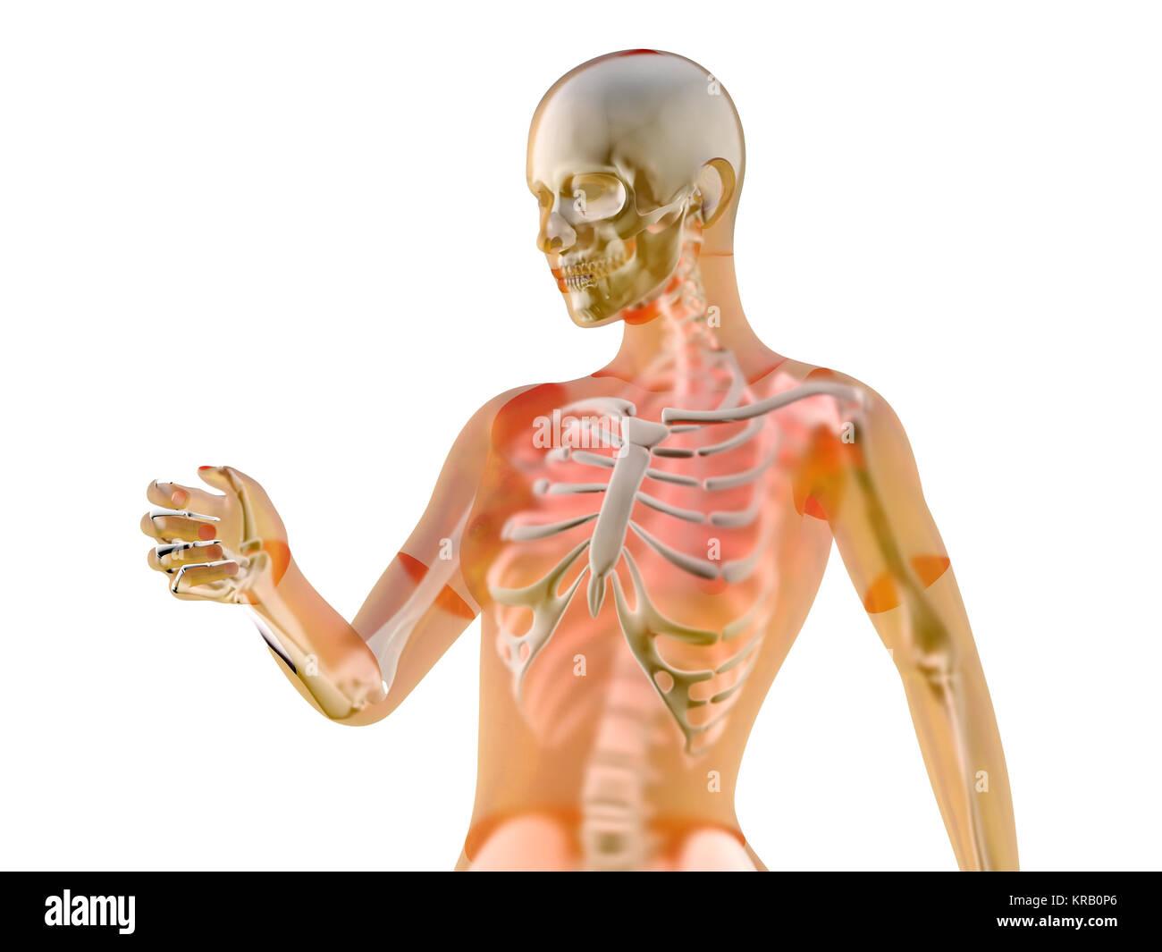 Anatomical Diagram Body Stockfotos & Anatomical Diagram Body Bilder ...