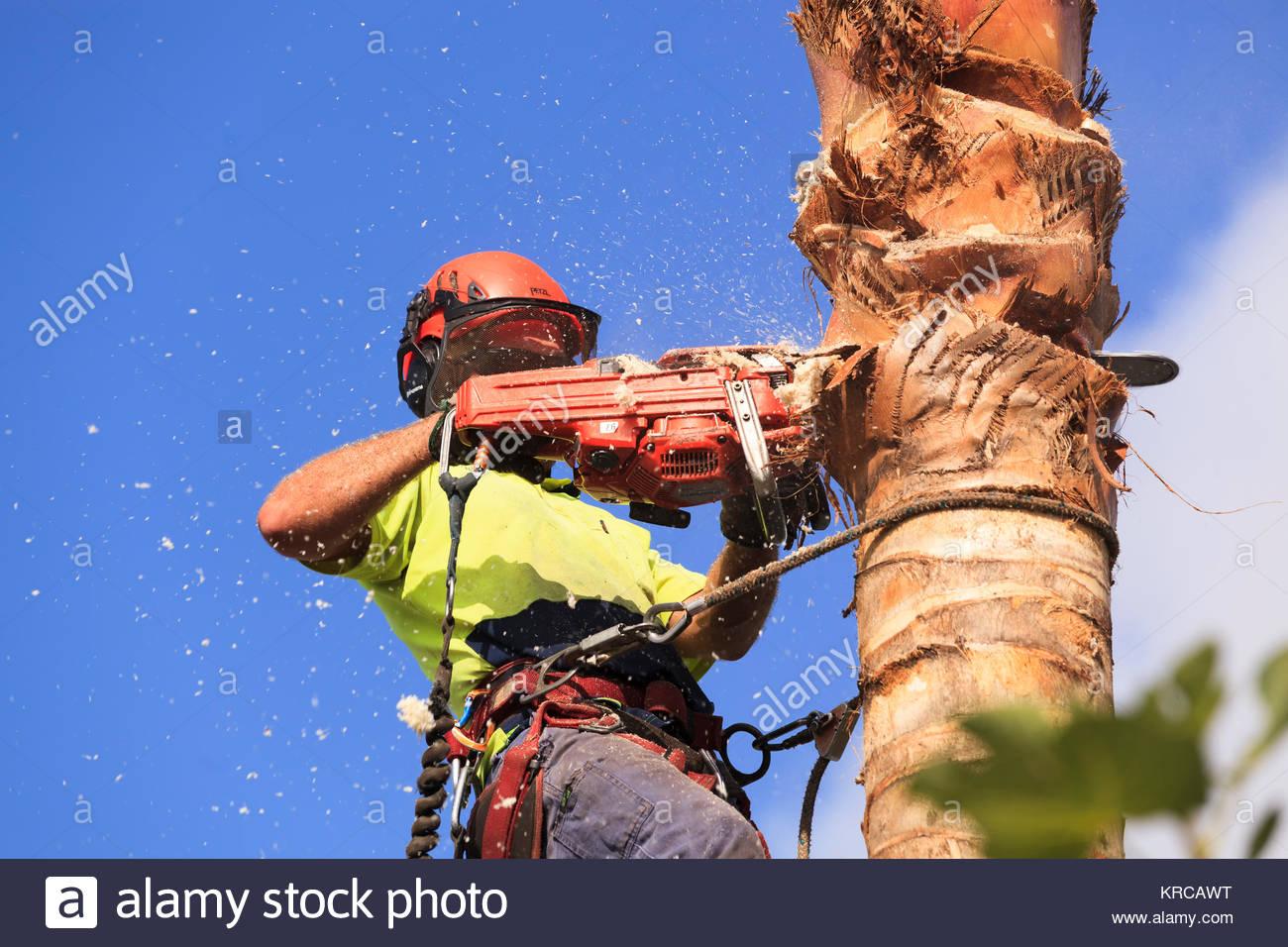 Klettergurt Baum : Baum lopper im kabelbaum mit sporen und kettensäge klettern palme
