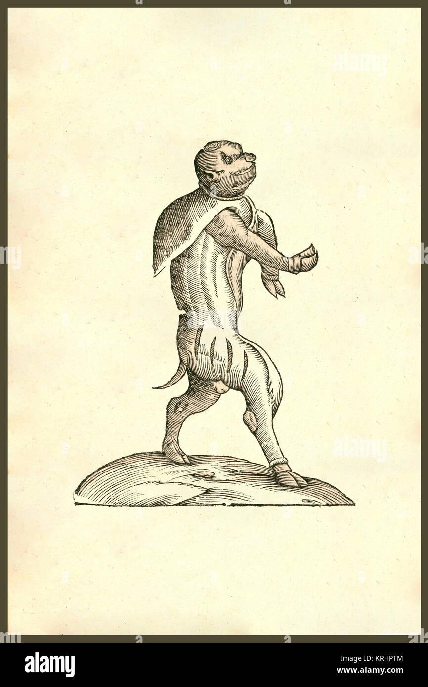 Vitulomonachus sorbini, 371, mit der ein Kalb Körper und ...