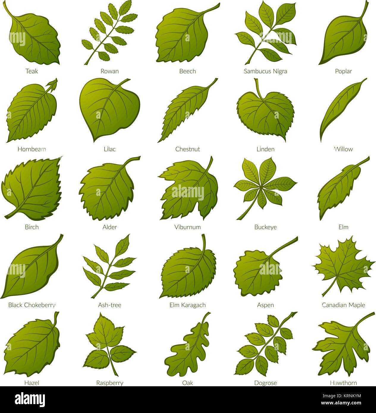 der grüne blätter von verschiedenen pflanzen bäume und