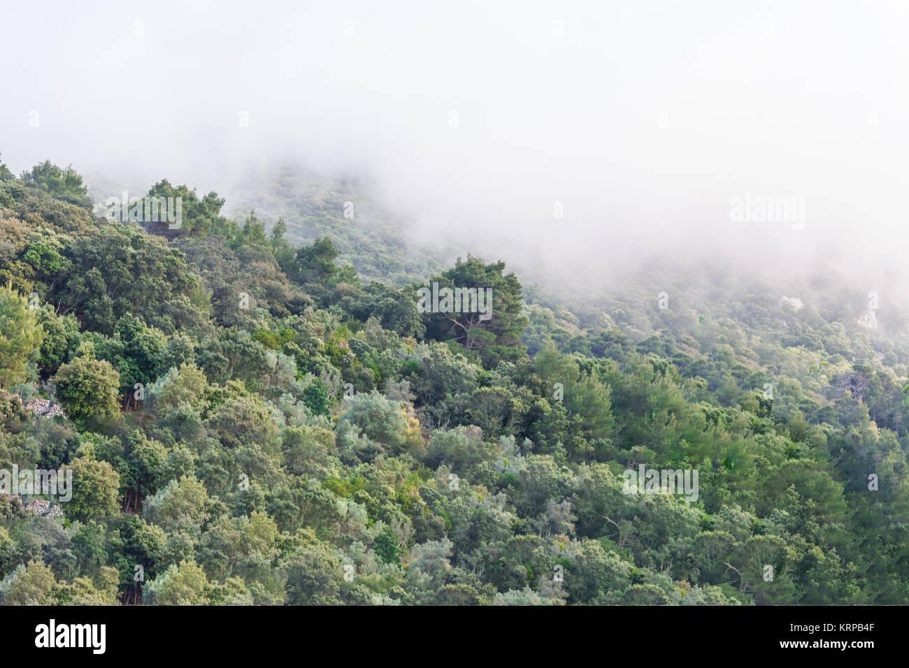Bewaldeter Berghang mit tief liegenden Wolke in Nebel gehüllt eine malerische Landschaft Blick. Stockbild