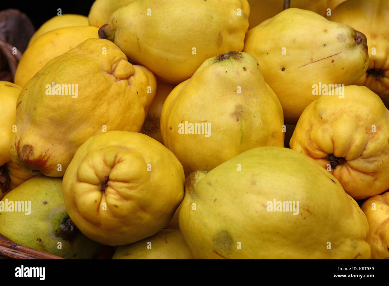 Frische Ernte Von Gelb Reife Quitten Früchte Nahaufnahme Stockfoto