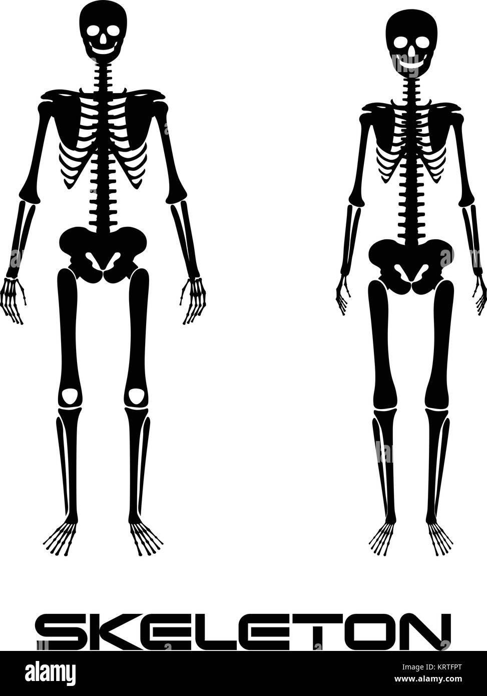 Charmant Menschliche Anatomie Männlich Und Weiblich Bilder ...