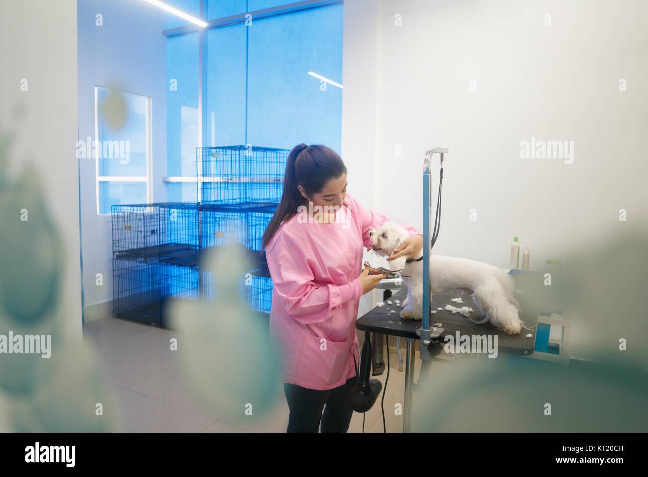 Junge Frau in Pet Shop arbeiten, trimmen Hund Haare, Mädchen Pflege Welpen für Schönheit in speichern. Stockbild