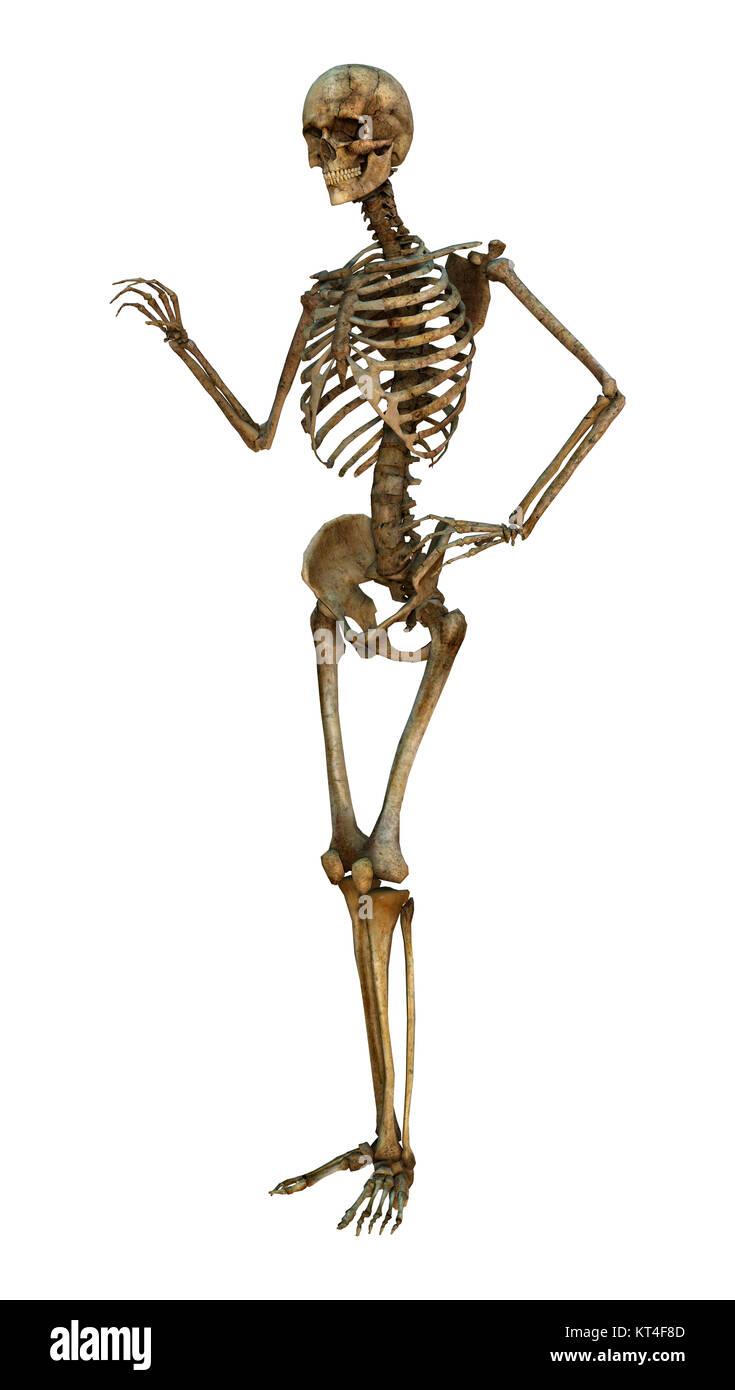 3D-Rendering menschliches Skelett auf Weiß Stockbild