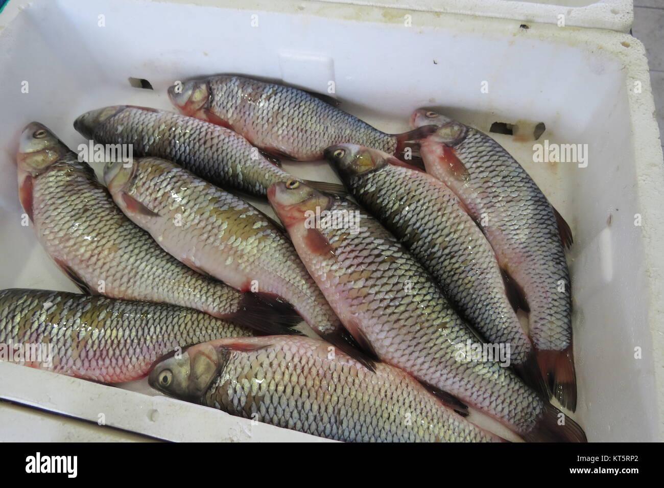 5efa2605b033 Adriatisches meer fische