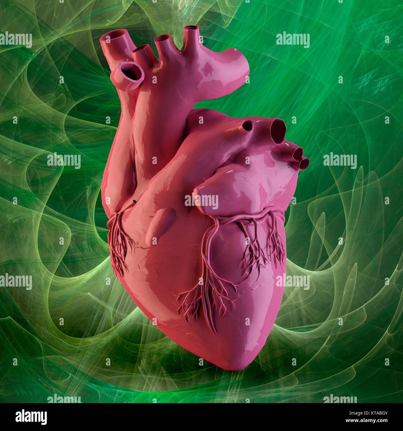 Herz und Koronararterien. 3D-Darstellung der externen Anatomie des ...