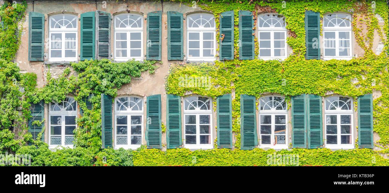 Fassade Begrünung mit Kletterpflanzen Stockfoto