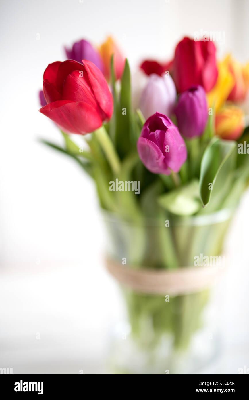 bunte tulpen in ein glas vase auf einem wei en hintergrund mit kurze sch rfentiefe stockfoto. Black Bedroom Furniture Sets. Home Design Ideas
