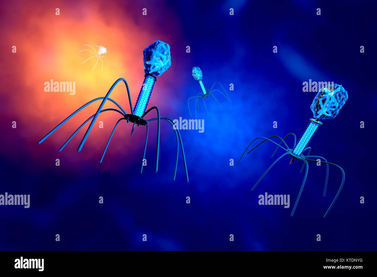3D-Darstellung einer anatomisch korrekte Konvergenz zu einer Gruppe von Bakteriophagen Viren Stockbild