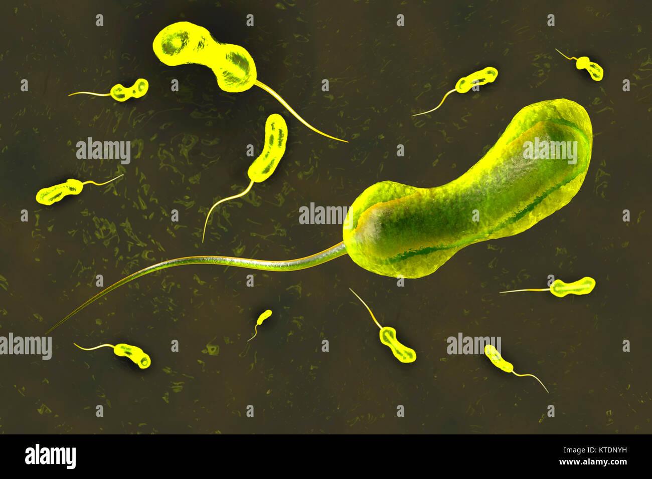 3D-Darstellung einer anatomisch korrekte Konvergenz zu einem Bakterium Vibrio cholerae, wodurch die berühmten Stockbild