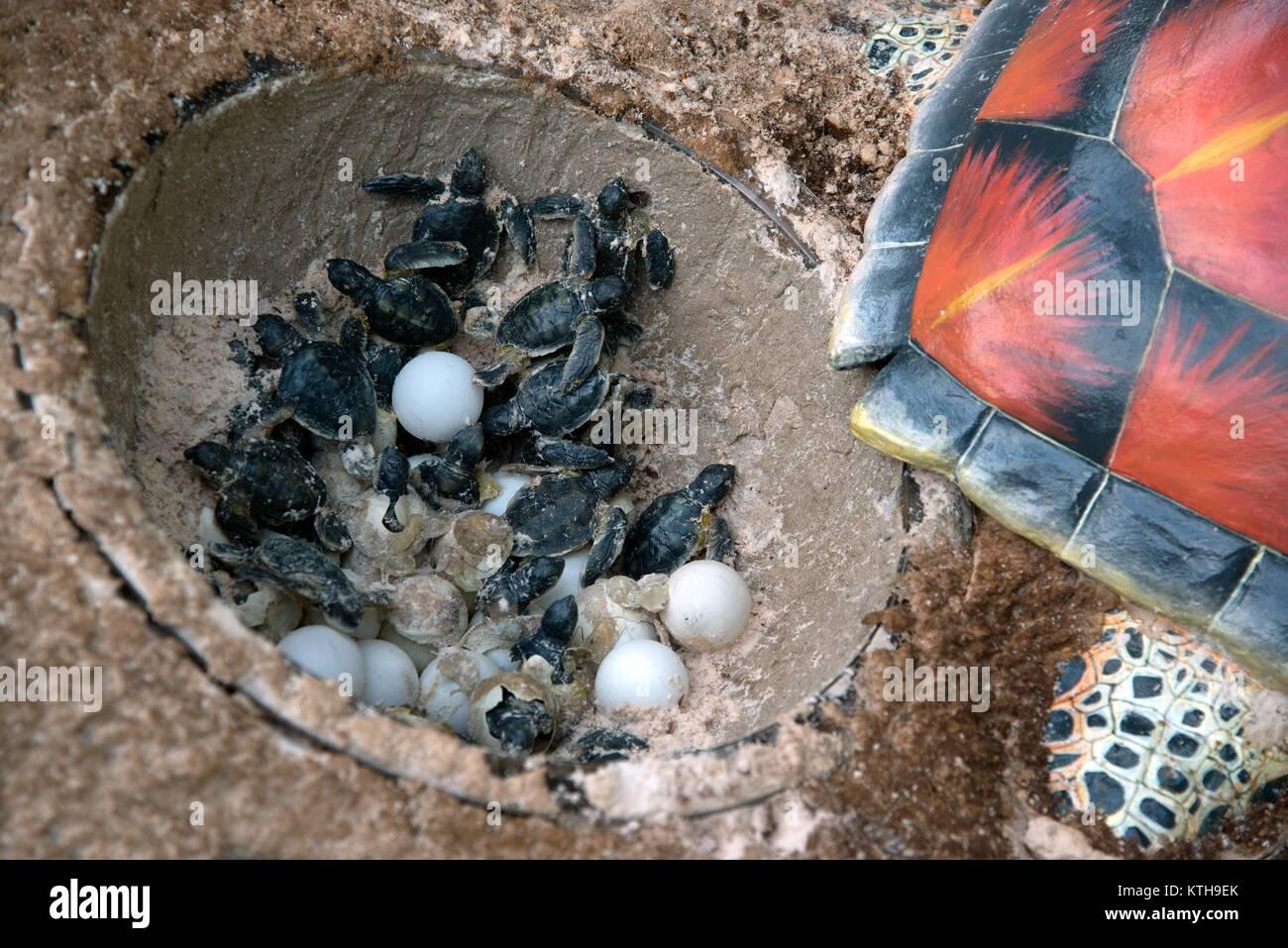 Atemberaubend Süsse Meeresschildkröte Färbung Seite Bilder ...