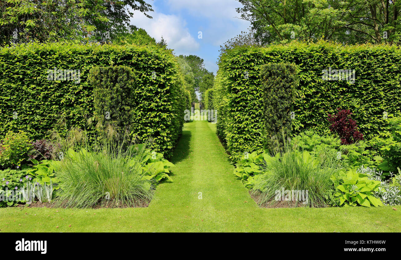 Eine formelle Landschaft Garten mit Gras weg zwischen geformte Hecken Stockbild