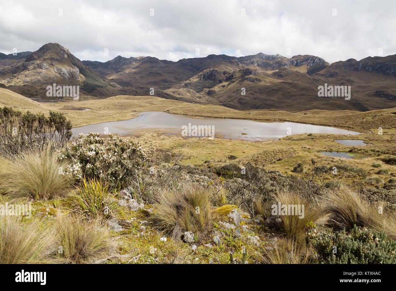 Ecuador Landschaft - El Cajas Nationalpark (Parque Nacional Cajas), Cuenca, Ecuador Südamerika Stockbild