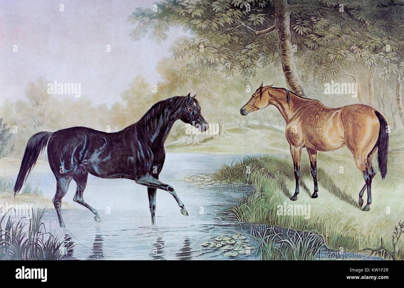 Zwei Pferde treffen. Aus der Mitte des 19. Jahrhunderts Stich von J ...