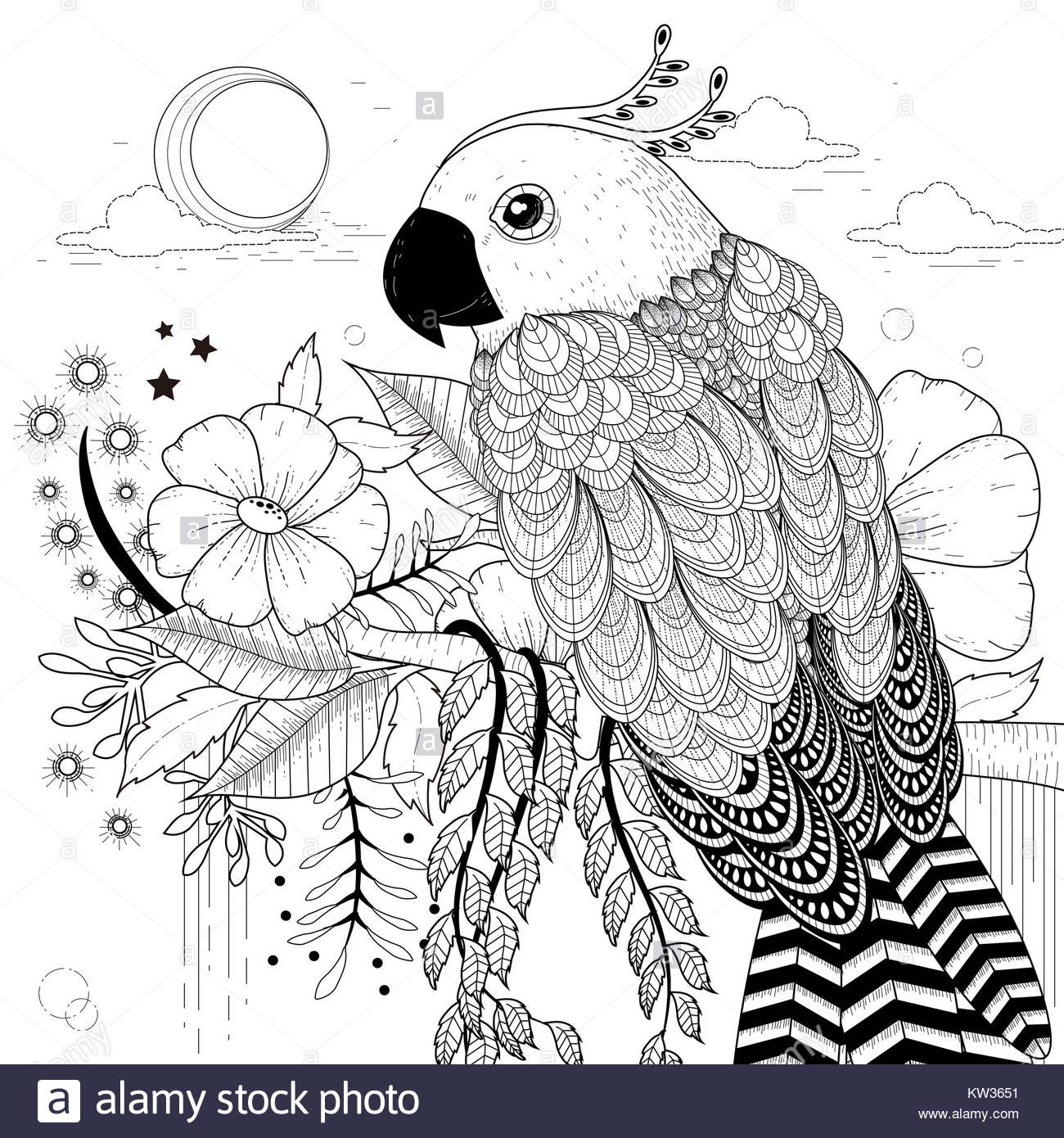 schöne Papagei Malvorlagen in exquisitem Stil Stockfoto, Bild ...