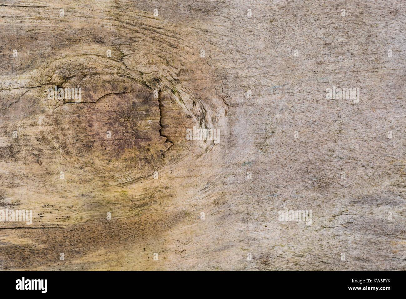Makro - Foto von der Oberfläche eines Stück des Alterns Sperrholz. Stockbild