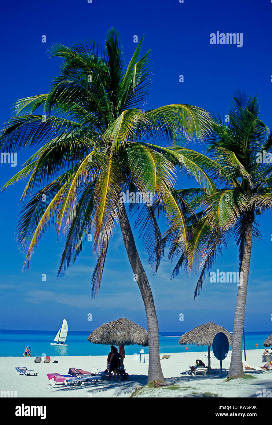 Palmen von Cayo Coco Beach, Kuba Stockbild
