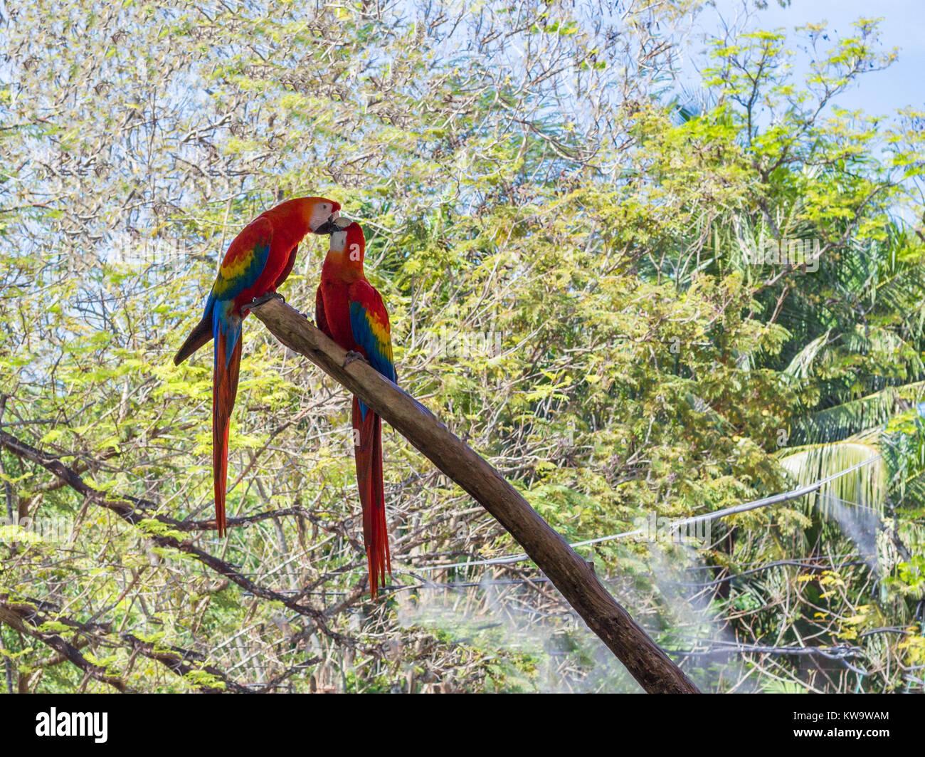 Liebe Vögel im Park Stockbild