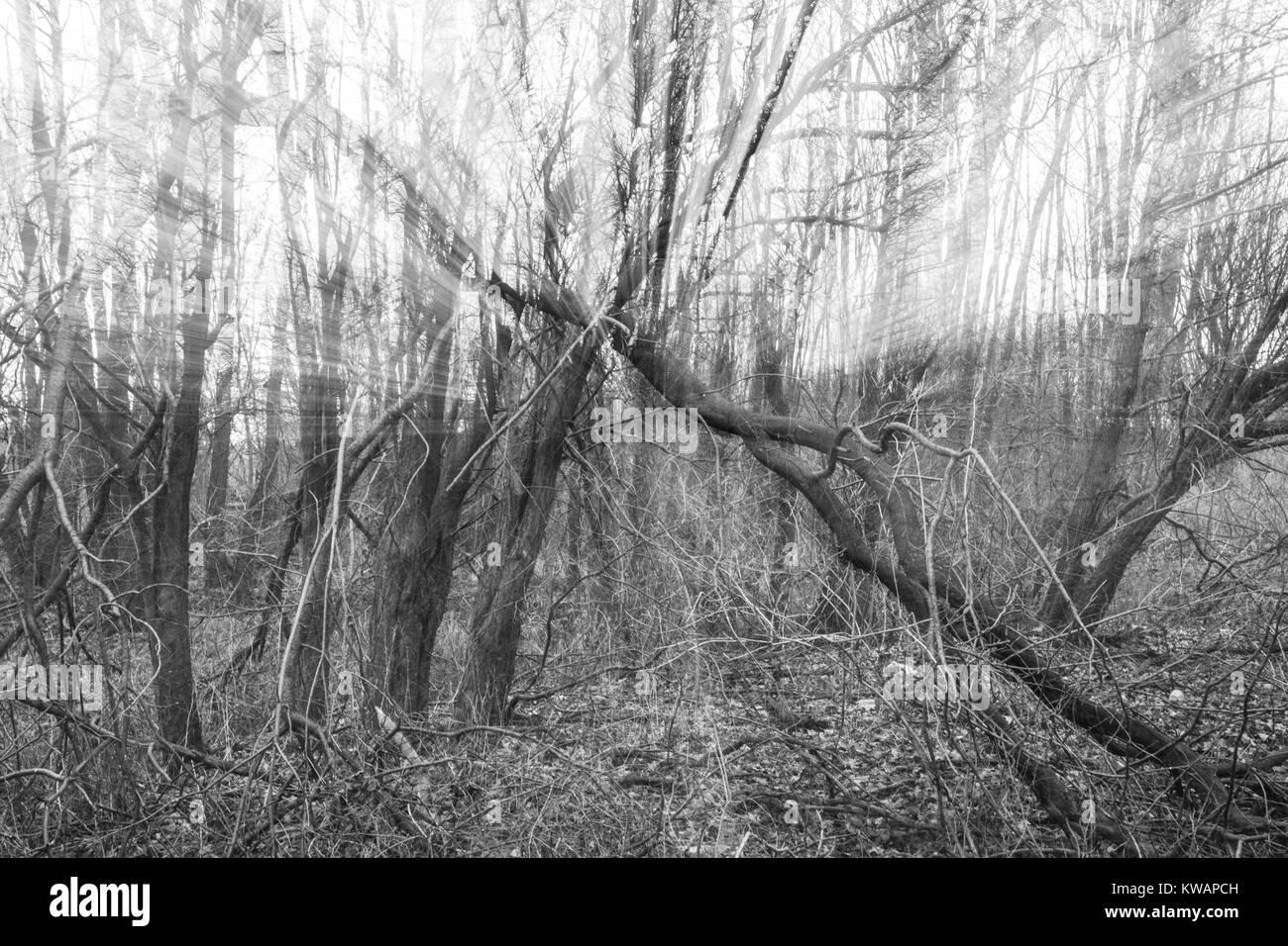 Großzügig Bäume Aus Draht Bilder - Elektrische Schaltplan-Ideen ...