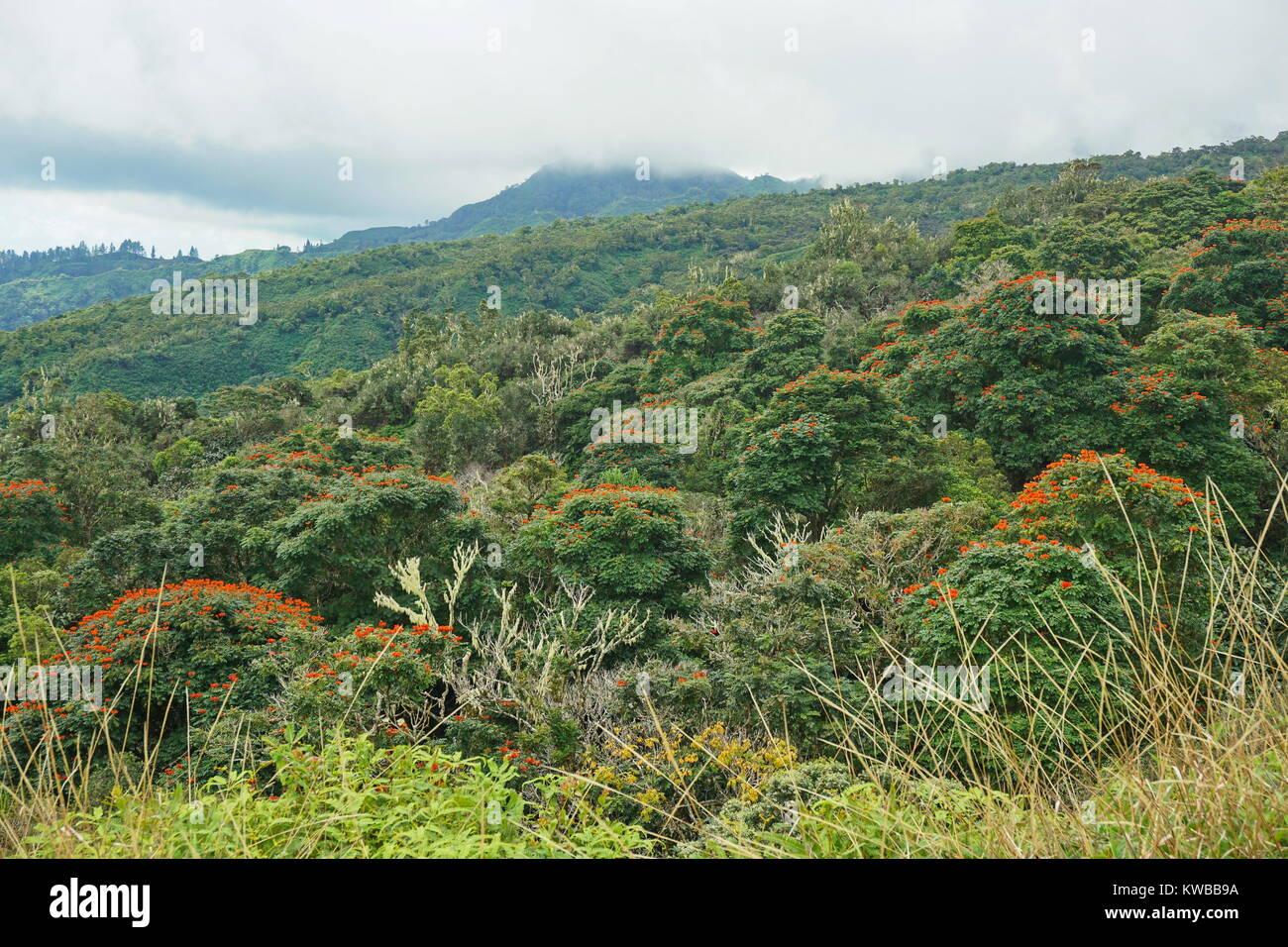 Insel Tahiti tropischen Regenwald in den Bergen in der Nähe der Mount Marau, Französisch-Polynesien, South Stockbild
