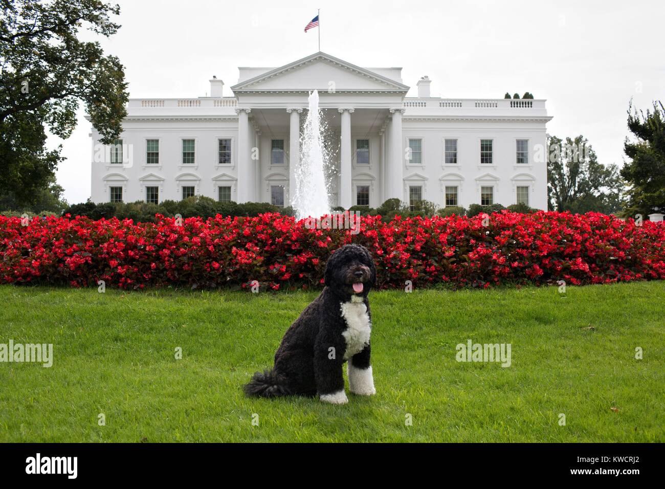 Bo, die Familie Obama Hund, auf der Rasenfläche des Weißen Hauses, Sept. 28, 2012. (BSLOC_2015_3_41) Stockbild