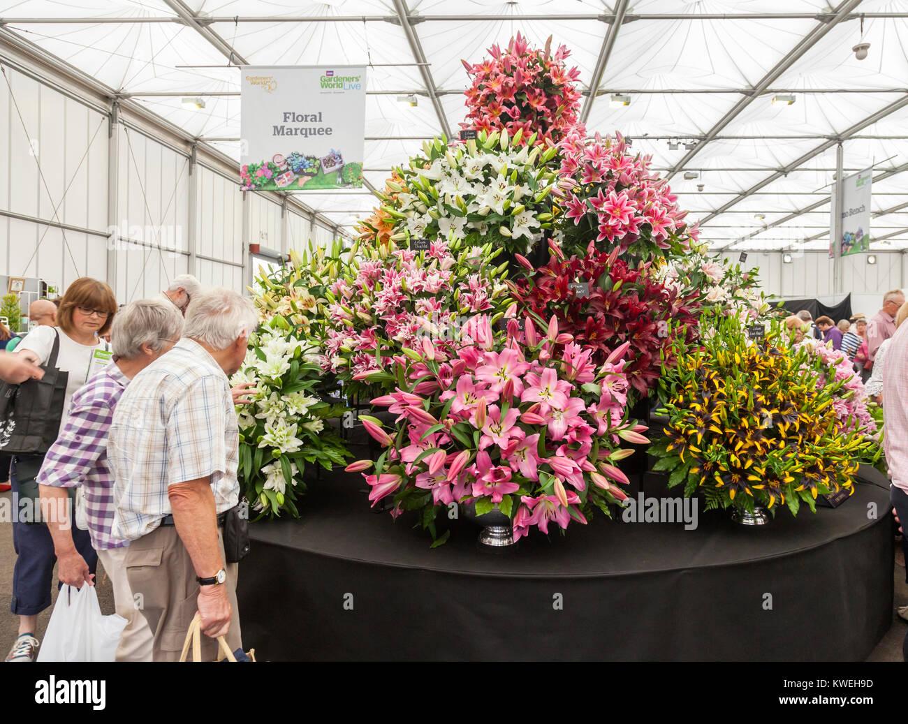 Die Besucher der floralen Festzelt der Gärtner' Welt Live Event im NEC, Birmingham, UK. Große Anzeige Stockbild